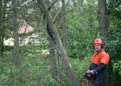 Træfældning og beskæring ,samt udtyndning Bødskov