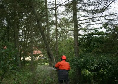 Træfældning Bødskov